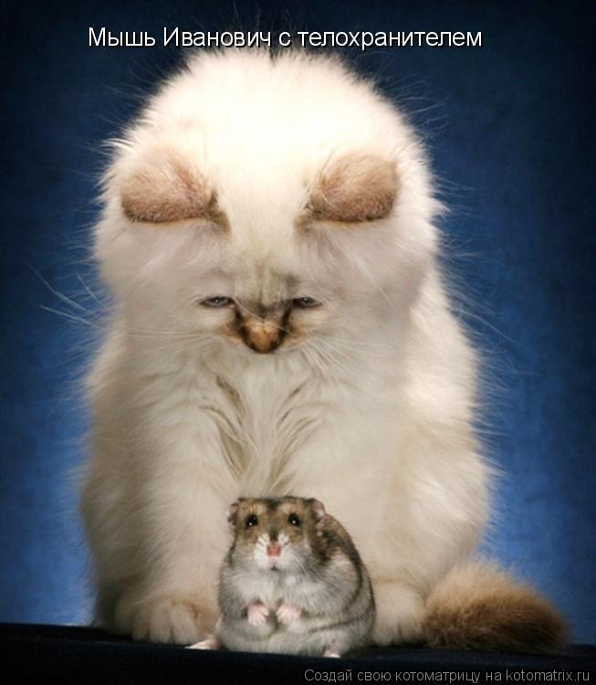 Котоматрица: Мышь Иванович с телохранителем