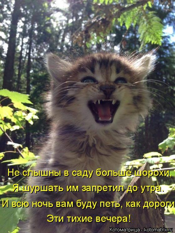 Котоматрица: Не слышны в саду больше шорохи, Я шуршать им запретил до утра. И всю ночь вам буду петь, как дороги Эти тихие вечера!