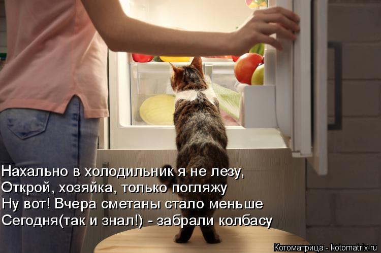 Котоматрица: Нахально в холодильник я не лезу, Открой, хозяйка, только погляжу  Ну вот! Вчера сметаны стало меньше Сегодня(так и знал!) - забрали колбасу