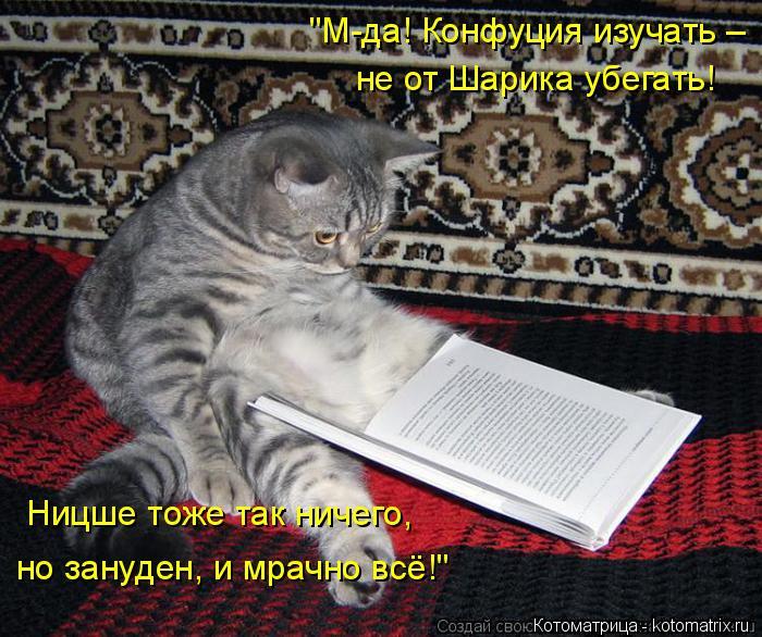 """Котоматрица: """"М-да! Конфуция изучать – не от Шарика убегать! Ницше тоже так ничего, но зануден, и мрачно всё!"""""""