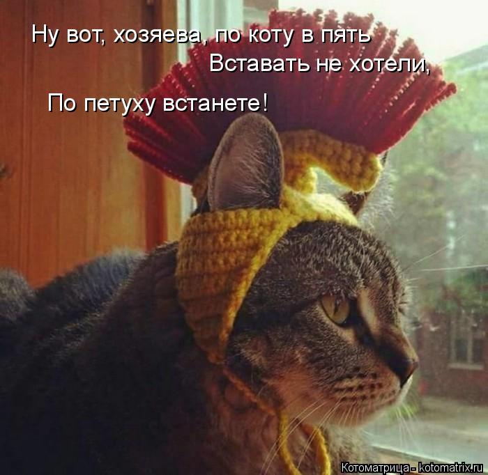 Котоматрица: Ну вот, хозяева, по коту в пять Вставать не хотели, По петуху встанете!