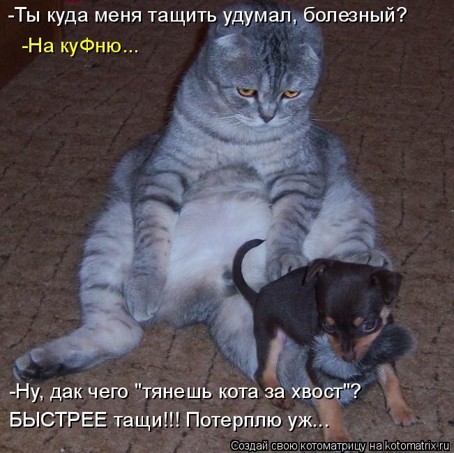 """Котоматрица: -Ты куда меня тащить удумал, болезный? -На куФню... -Ну, дак чего """"тянешь кота за хвост""""? БЫСТРЕЕ тащи!!! Потерплю уж..."""