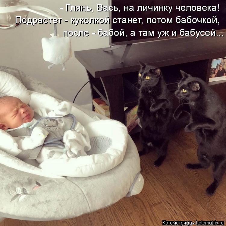 Котоматрица: - Глянь, Вась, на личинку человека! Подрастет - куколкой станет, потом бабочкой, после - бабой, а там уж и бабусей...