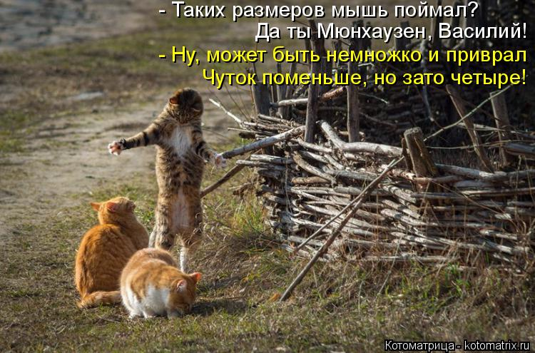 Котоматрица: - Таких размеров мышь поймал? - Ну, может быть немножко и приврал Да ты Мюнхаузен, Василий! Чуток поменьше, но зато четыре!