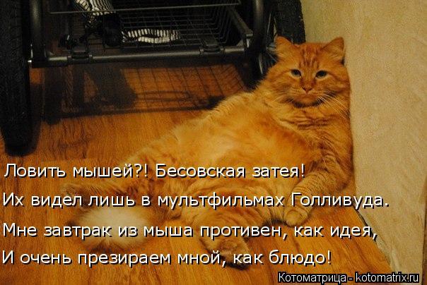 http://kotomatrix.ru/images/lolz/2018/12/05/kotomatritsa_M.jpg
