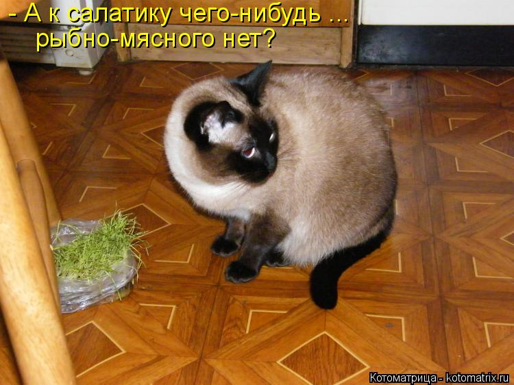 http://kotomatrix.ru/images/lolz/2018/12/05/kotomatritsa_R.jpg