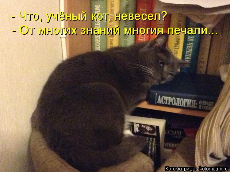 Котоматрица: - От многих знаний многия печали... - Что, учёный кот, невесел?