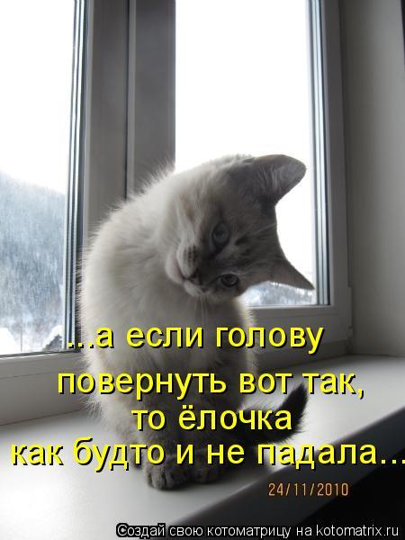 Котоматрица: ...а если голову повернуть вот так, то ёлочка как будто и не падала...