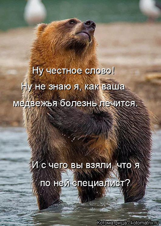 Котоматрица: Ну честное слово! Ну не знаю я, как ваша медвежья болезнь лечится. И с чего вы взяли, что я по ней специалист?