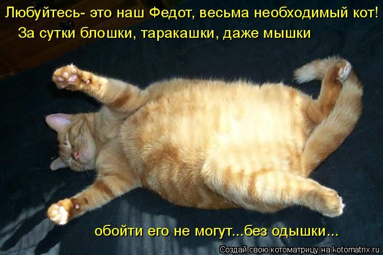 Котоматрица: Любуйтесь- это наш Федот, весьма необходимый кот! За сутки блошки, таракашки, даже мышки обойти его не могут...без одышки...