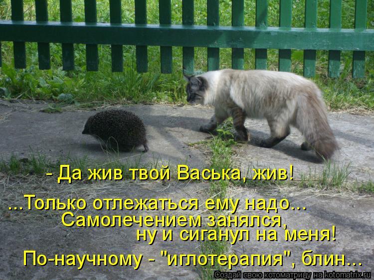"""Котоматрица: - Да жив твой Васька, жив! ...Только отлежаться ему надо... Самолечением занялся, ну и сиганул на меня! По-научному - """"иглотерапия"""", блин..."""