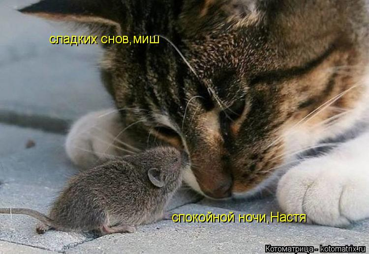 Котоматрица: спокойной ночи,Настя сладких снов,миш