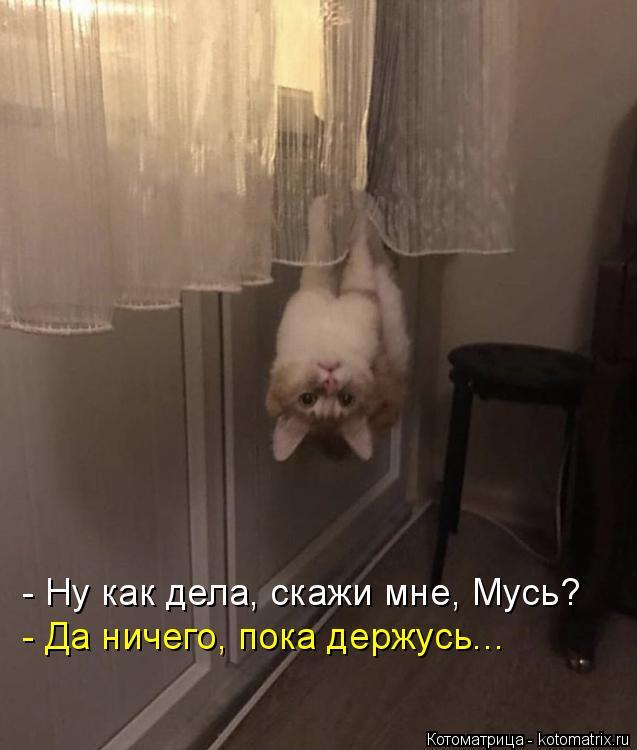 Котоматрица: - Ну как дела, скажи мне, Мусь? - Да ничего, пока держусь...