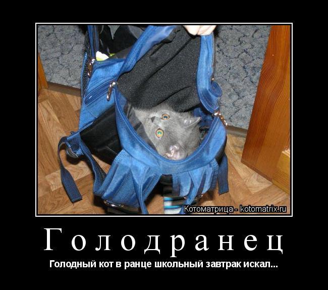 Котоматрица: Голодранец Голодный кот в ранце школьный завтрак искал...