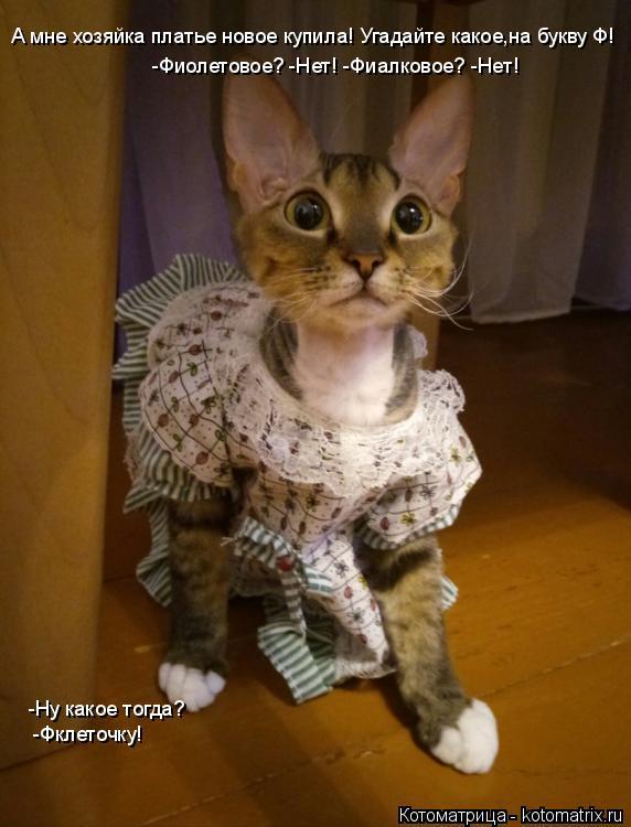 Котоматрица: А мне хозяйка платье новое купила! Угадайте какое,на букву Ф! -Фирлетовое? -Нет! А мне хозяйка платье новое купила! Угадайте какое,на букву Ф!