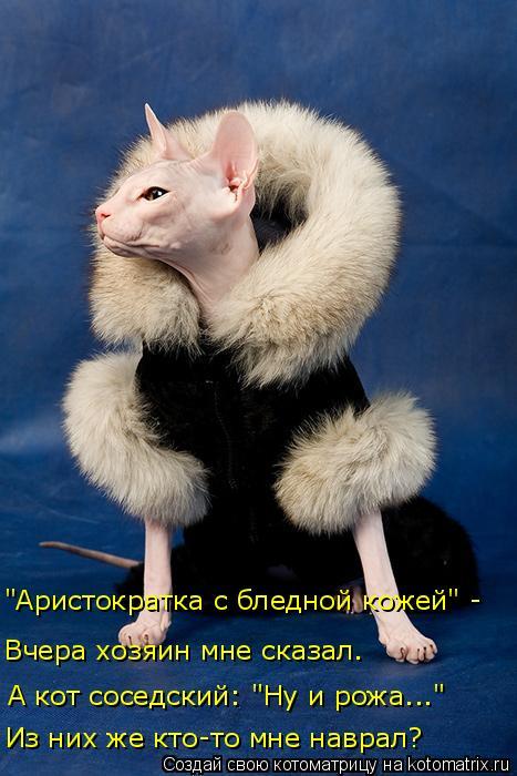 """Котоматрица: А кот соседский: """"Ну и рожа..."""" Из них же кто-то мне наврал? Вчера хозяин мне сказал. """"Аристократка с бледной кожей"""" -"""