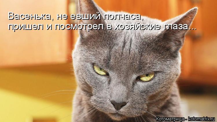 Котоматрица: Васенька, не евший полчаса, пришел и посмотрел в хозяйские глаза...