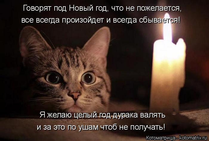 Котоматрица: Говорят под Новый год, что не пожелается, все всегда произойдет и всегда сбывается! Я желаю целый год дурака валять и за это по ушам чтоб не п