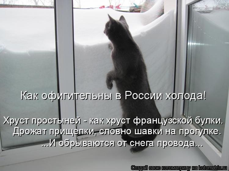 Котоматрица: Как офигительны в России холода! Хруст простыней - как хруст французской булки. Дрожат прищепки, словно шавки на прогулке. ...И обрываются от