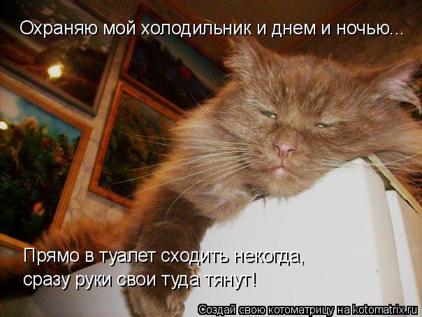 Котоматрица: Охраняю мой холодильник и днем и ночью... Прямо в туалет сходить некогда,  сразу руки свои туда тянут!