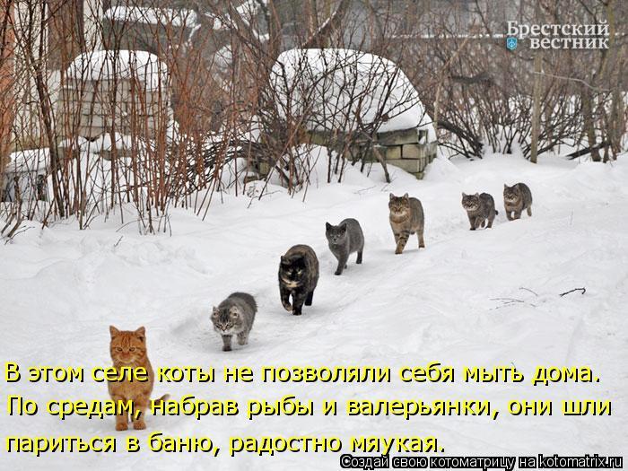 Котоматрица: В этом селе коты не позволяли себя мыть дома. париться в баню, радостно мяукая. По средам, набрав рыбы и валерьянки, они шли