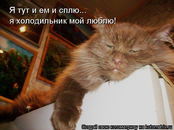 Котоматрица: Я тут и ем и сплю... я холодильник мой люблю!