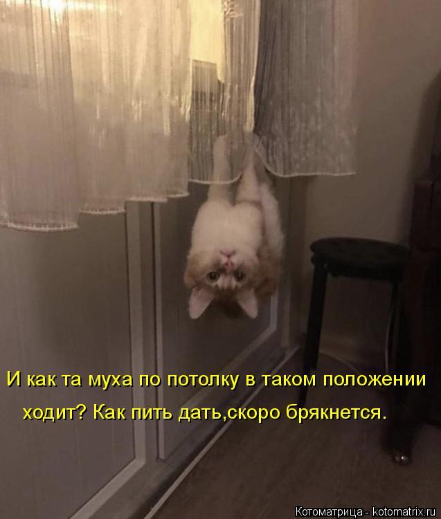 Котоматрица: И как та муха по потолку в таком положении ходит? Как пить дать,скоро брякнется.