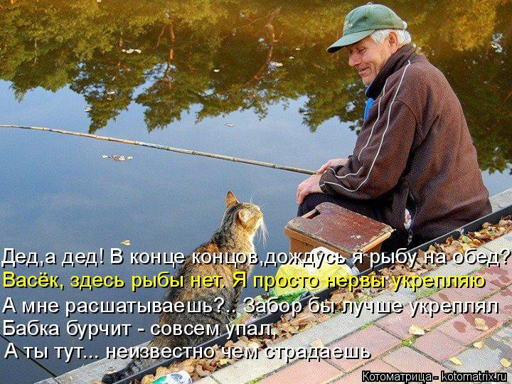 Котоматрица: Дед,а дед! В конце концов,дождусь я рыбу на обед? Васёк, здесь рыбы нет. Я просто нервы укрепляю А мне расшатываешь?.. Забор бы лучше укреплял  ?