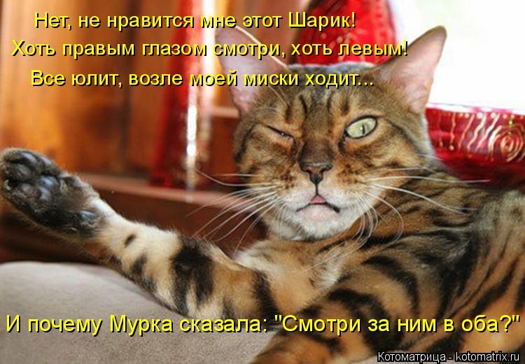 """Котоматрица: Нет, не нравится мне этот Шарик! Хоть правым глазом смотри, хоть левым! Все юлит, возле моей миски ходит... И почему Мурка сказала: """"Смотри за н?"""
