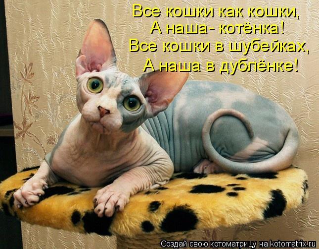 Котоматрица: Все кошки как кошки, А наша- котёнка! Все кошки в шубейках, А наша в дублёнке!