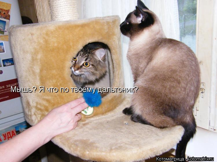 Котоматрица: Мышь? Я что по твоему дальтоник?