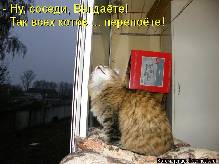 Котоматрица: - Ну, соседи, Вы даёте! Так всех котов ... перепоёте!