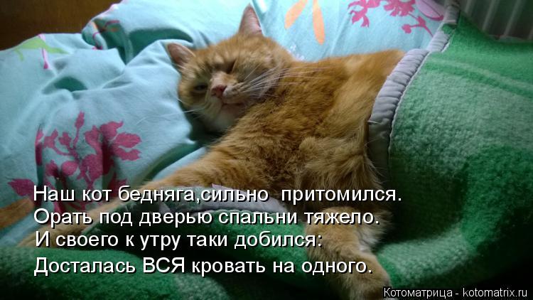 Котоматрица: Досталась ВСЯ кровать на одного. И своего к утру таки добился: Орать под дверью спальни тяжело. Наш кот бедняга,сильно  притомился.