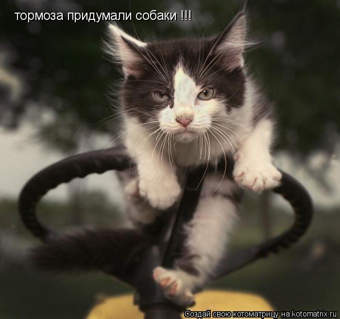 Котоматрица: тормоза придумали собаки !!!