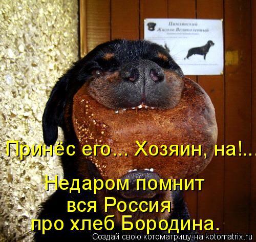 Котоматрица: вся Россия про хлеб Бородина. Недаром помнит Принёс его... Хозяин, на!...