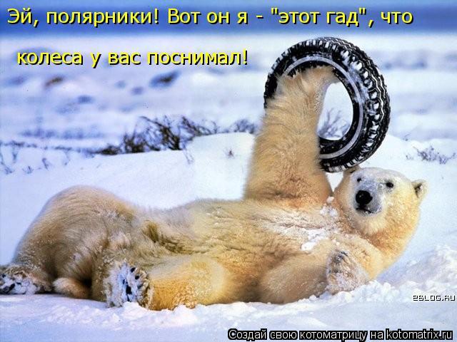 """Котоматрица: Эй, полярники! Вот он я - """"этот гад"""", что  колеса у вас поснимал!"""