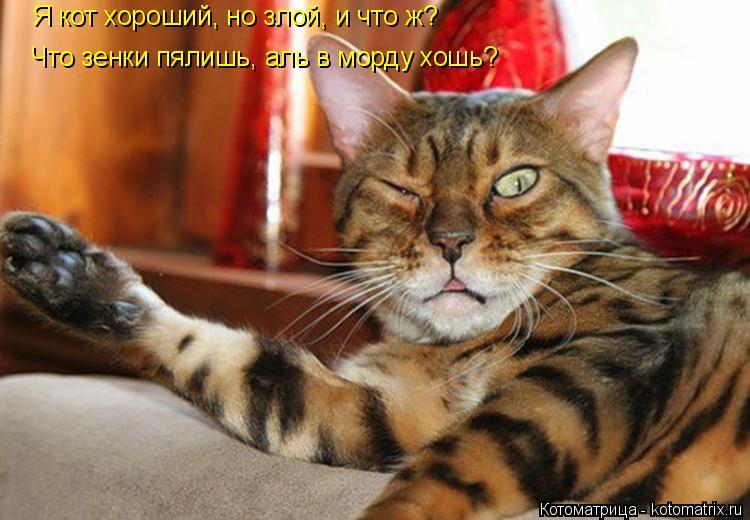 Котоматрица: Я кот хороший, но злой, и что ж? Что зенки пялишь, аль в морду хошь?