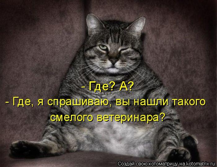 Котоматрица: - Где? А? - Где, я спрашиваю, вы нашли такого смелого ветеринара?