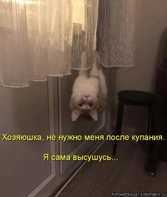 Котоматрица: Хозяюшка, не нужно меня после купания. Я сама высушусь...