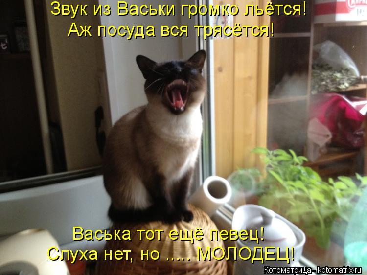 Котоматрица: Звук из Васьки громко льётся! Аж посуда вся трясётся! Васька тот ещё певец! Слуха нет, но ..... МОЛОДЕЦ!