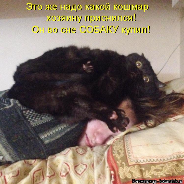 Котоматрица: Это же надо какой кошмар  хозяину приснился! Он во сне СОБАКУ купил!