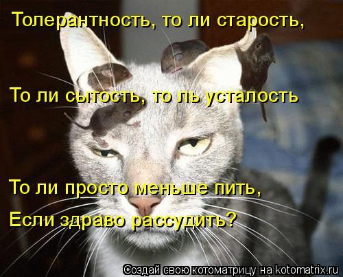 Котоматрица: Толерантность, то ли старость, То ли сытость, то ль усталость То ли просто меньше пить, Если здраво рассудить?