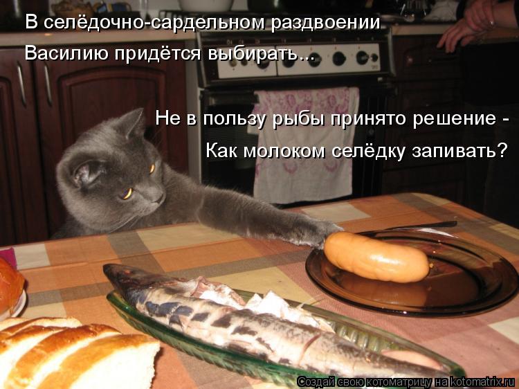 Котоматрица: В селёдочно-сардельном раздвоении Василию придётся выбирать... Не в пользу рыбы принято решение - Как молоком селёдку запивать?