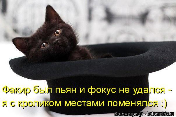 Котоматрица: Факир был пьян и фокус не удался -  я с кроликом местами поменялся :)