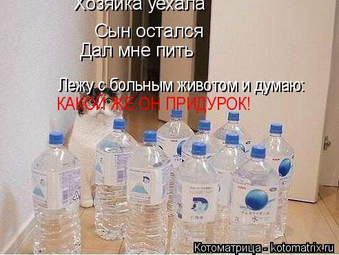 Котоматрица: Хозяйка уехала   Сын остался Дал мне пить Лежу с больным животом и думаю: КАКОЙ ЖЕ ОН ПРИДУРОК!