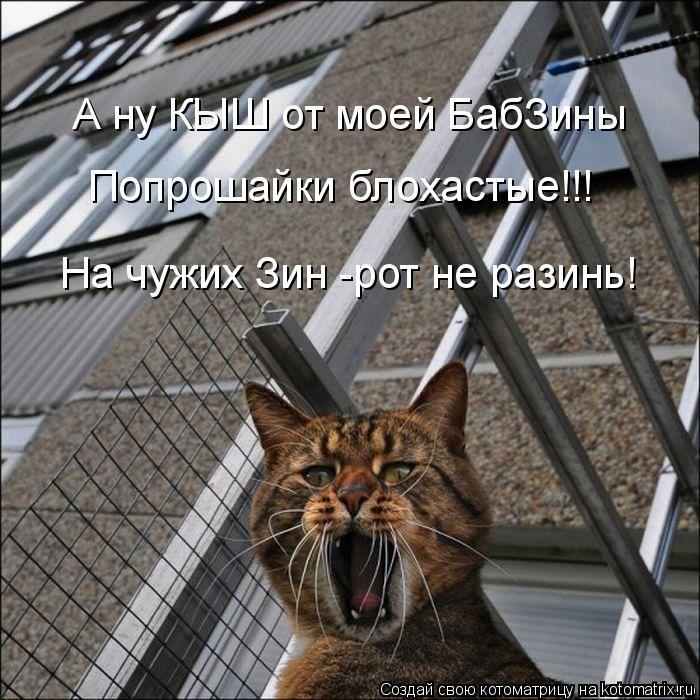 Котоматрица: А ну КЫШ от моей БабЗины  Попрошайки блохастые!!! На чужих Зин -рот не разинь!