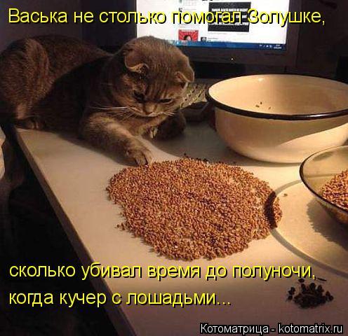 Котоматрица: Васька не столько помогал Золушке, сколько убивал время до полуночи, когда кучер с лошадьми...
