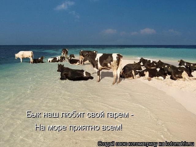 Котоматрица: Бык наш любит свой гарем - На море приятно всем!