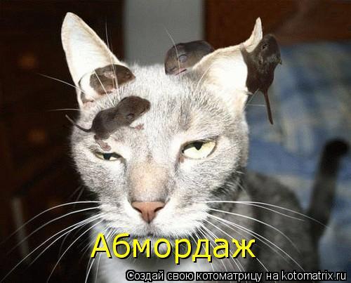 Котоматрица: Абмордаж