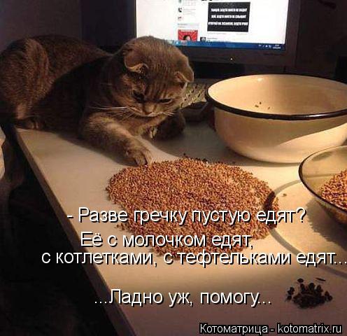 Котоматрица: - Разве гречку пустую едят?  Её с молочком едят, ...Ладно уж, помогу... с котлетками, с тефтельками едят...